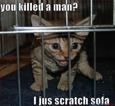 Lol cat 8